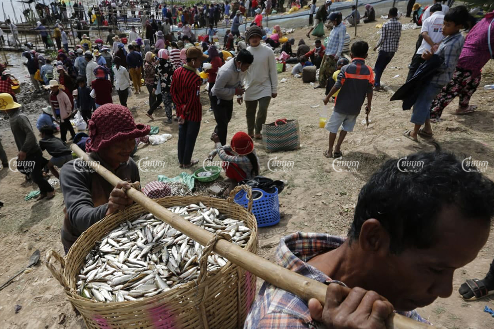 Prahok manufacturers have complained of high fish prices and the maturity of the fish, as procurement for prahok production kicked off this month. Panha Chhorpoan