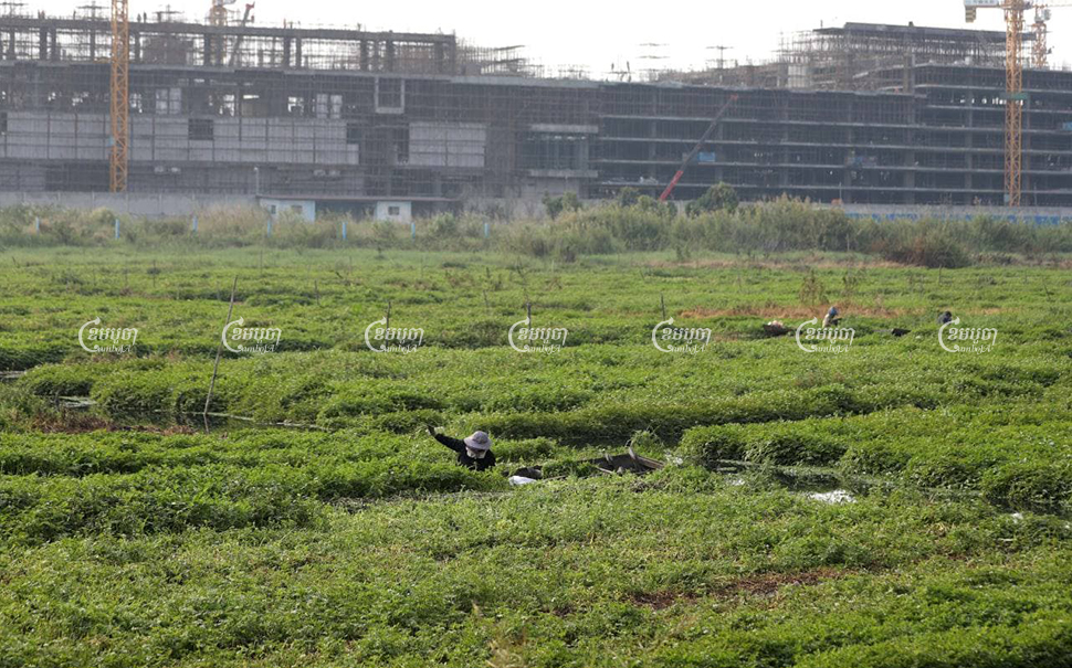 UN experts are concerned over development activities that have resulted in the in-filling of the Boeung Tompoun and Cheung Ek wetlands in southern Phnom Penh. CamboJA/Pring Samrang