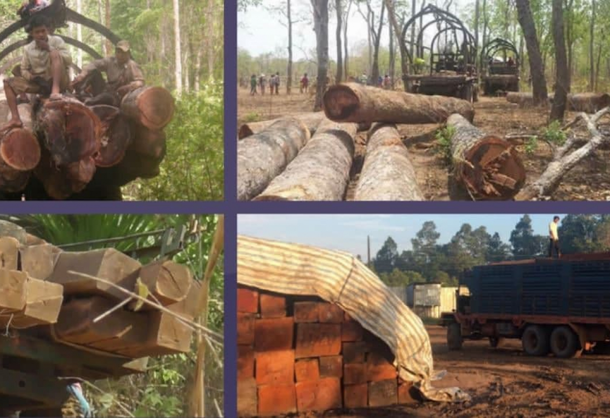 Felled timber in various stages of transport from Prey Preah Roka and Prey Lang to the Sovann Company sawmill.