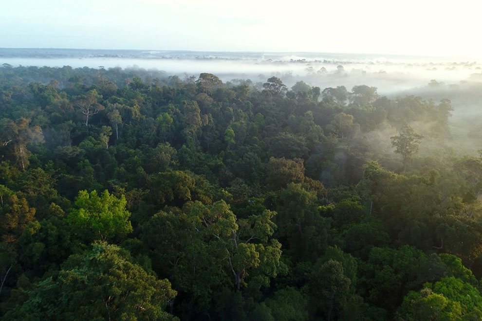 Prey Lang Wildlife Sanctuary, pictured, has reportedly been the site of continued illegal logging despite US funding for the forest's protection. JSC
