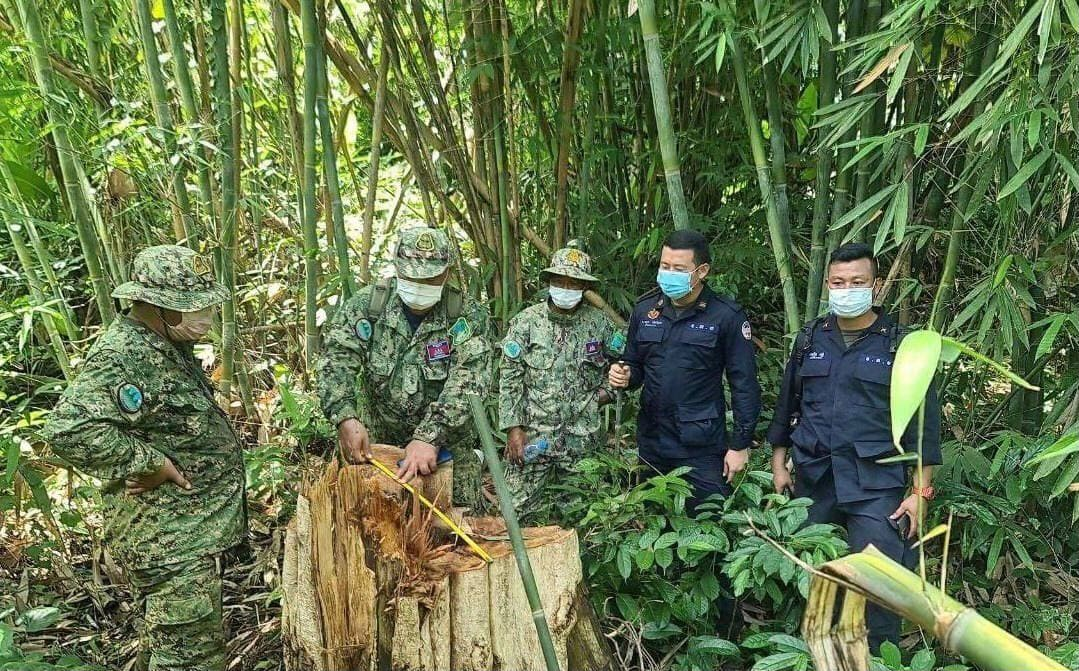 Environment and military officials measure a tree stump in Mondulkiri. Photo posted on the National Military Police's Facebook page.